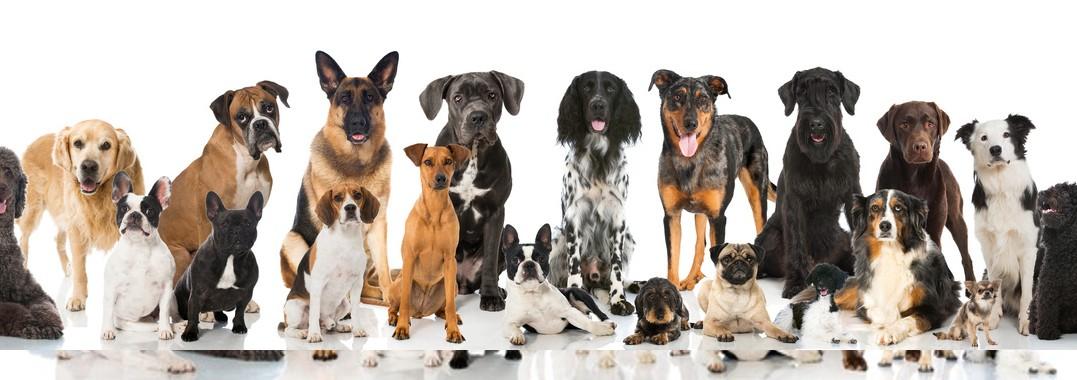Hundeerziehung 380 px